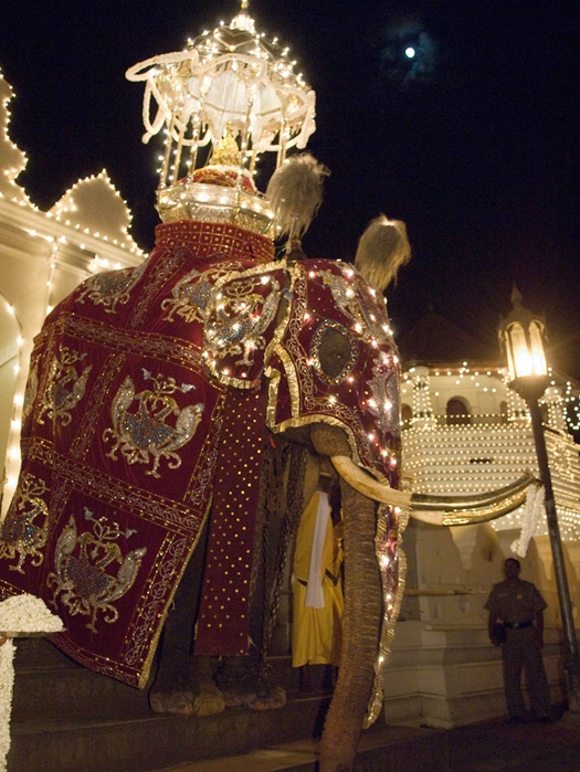Under the full August moon, a large temple tusker leaves the Dalada Maligawa carrying the Sacred Tooth Relic Casket.